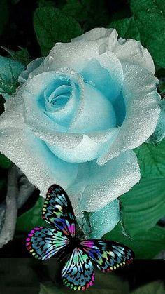 Foto animada Beautiful Flowers Wallpapers, Beautiful Rose Flowers, Beautiful Gif, Exotic Flowers, Beautiful Butterflies, Amazing Flowers, Pretty Flowers, Flowers Gif, Butterfly Flowers