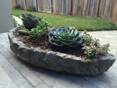 Free form hypertufa trough with newly planted succulents