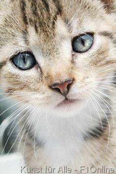 Schnurrhaare Katzenbaby