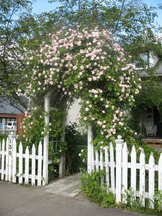 picket fence with rose