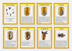 krabbelwiese: Honigbiene Biene Metamorphose