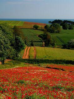 Breathtaking meadows with views of the ocean. East Devon, Britain.