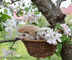 Hedgehogs own Little Tree House by Elena Eremina