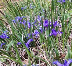 «#природа #красотааа #цветы #Сибирь #иркутск #олха #весна #путешествия #воспоминания #яркое #сказка #мечта #nature #world #travel #flowers #dream #irkutsk…»