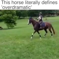 Funny Horse Videos, Funny Horse Memes, Funny Horse Pictures, Funny Horses, Funny Animal Jokes, Cute Horses, Funny Animal Videos, Cute Funny Animals, Animal Memes