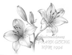 Gevonden op internet Realistic Flower Drawing, Pencil Drawings Of Flowers, Flower Drawing Tutorials, Pencil Shading, Skull Art, Pictures To Draw, Flower Art, Sleeve Tattoos, Sketching