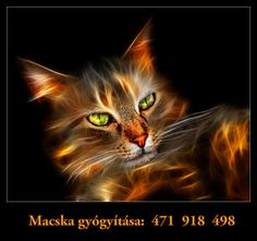 Macska gyógyítása