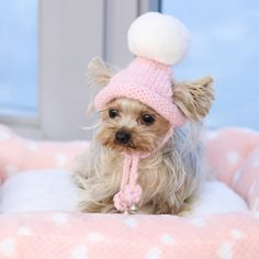 Handmade Pink Ring Bells Knitted Kawaii Pets Store Warm Lovely Dog Hats for Small Pets Cats Maltese Yorkie Winter Cap Puppy Hats, Yorkie Puppy, Yorkie Clothes, Pet Clothes, Knitting Patterns Free Dog, Pet Ducks, Small Dog Clothes, Dog Pin, Girl And Dog