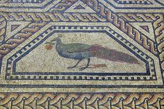 Roman Mosaic. Peacock With an Orange. Cologne (Colonia Claudia Ara Agrippinensium), Germany.