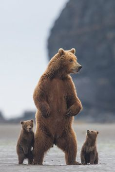 Bear family standing by Tin Man.
