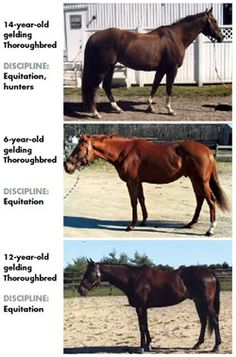 Conformation Clinic: Choose the Best Equitation Horse | Practical Horseman Magazine
