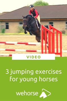 Gymnastic jumping exercises are fantastic to strengthen your horse's muscles. Here are some ideas to introduce gymnastic jumping to young horses' training. Horse Watch, Horse Exercises, Horse Riding Tips, Natural Horsemanship, Riding Lessons, Dressage Horses, Olympic Champion, Show Jumping, Horse Stuff