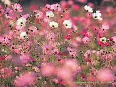 pink garden flowers - Google Search