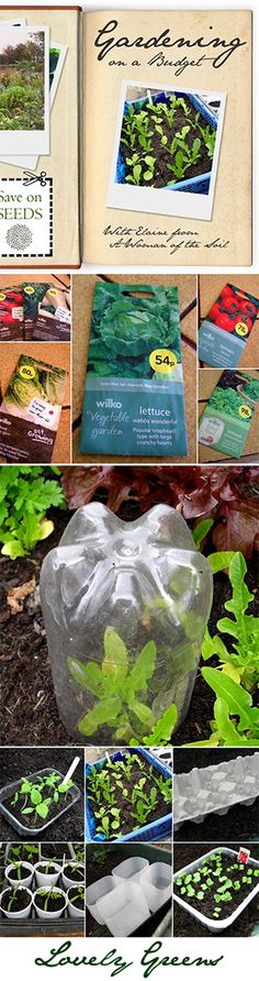 Eco-friendly Ideas for Gardening on a Budget Tips and tricks for gardening on a budget - ideas on saving money on seeds, upcycled planters and pots, and growing in small spaces Permaculture, Organic Gardening, Gardening Tips, Gardening Zones, Gardening Supplies, Allotment Gardening, Kitchen Gardening, Vegetable Garden, Garden Plants