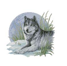 Laying Wolf * Kreuzstich