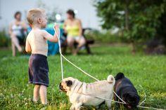 #Mopsy na spacerze ? :) więcej moich zdjęć na http://www.snaphub.pl