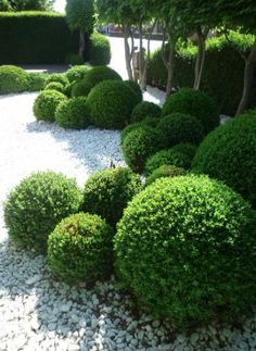 Balls from Topiary in a modern, minimalist garden design - Garten Design - # Garden Design, Topiary Garden, Minimalist Garden, Boxwood Garden, Outdoor, Japanese Garden, Modern Garden, Landscape, Outdoor Landscaping