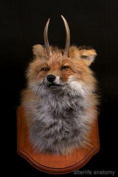 Antlered Fox