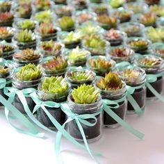 Succulent in Jar With Satin Ribbon