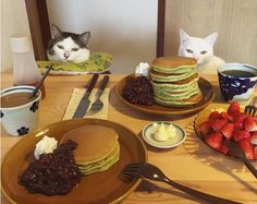 They Sit Down To Enjoy Dinner. When The Cats Arrive? Watch Their Paws!