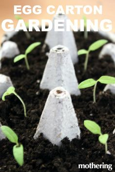 Gardening With Kids: How to Start Seeds in Recycled Egg Cartons