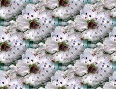 White Spring Flowers Collage Art Print