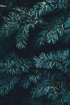 Enjoy 35 Christmas iPhone Wallpapers by Preppy Wallpaper Wallpaper Natal, Tree Wallpaper, Wallpaper Backgrounds, Iphone Wallpapers, Winter Iphone Wallpaper, Wallpaper Desktop, New Year Wallpaper, Painting Wallpaper, Iphone Backgrounds