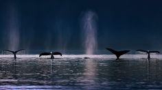 7月22日、ザトウクジラ