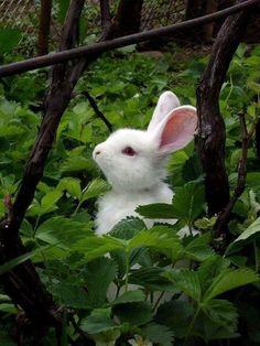 Farm Animals, Animals And Pets, Cute Animals, Beautiful Creatures, Animals Beautiful, Tier Fotos, Cute Bunny, Adorable Bunnies, Animal Kingdom