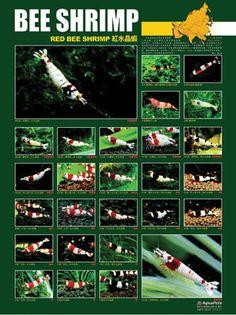 Холост 24 плакаты доступны (первые 14) .... - Arowanaclub Канада