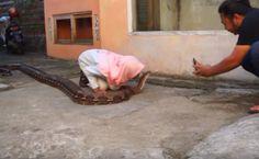 photo gadis berjilbab sedang mencium ular