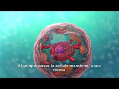 Biologia (Struttura e funzione della cellula in 3D) - YouTube Cellulite, Christmas Bulbs, Geek Stuff, Holiday Decor, Youtube, Geek Things, Christmas Light Bulbs, Youtubers, Youtube Movies