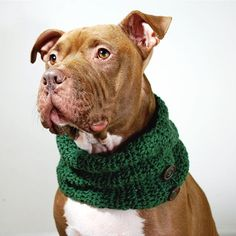 Dog Cowl Green Crochet with Button Accents for Large Breeds