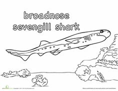 Thresher Shark Coloring Page | Kid activities | Shark ...