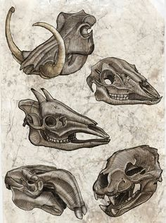 A variety of five interesting skulls. #Anatomy #Sketch