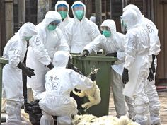 Scientists talk of 'pandemic potential' after first confirmed human death from new strain of bird flu