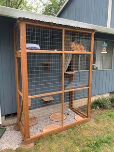Diy Cat Enclosure, Outdoor Cat Enclosure, Cat Fence, Cat House Diy, Cat Window, Cat Playground, Outdoor Cats, Pet Furniture, Diy Stuffed Animals