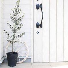 ヨーロッパや地中海のオシャレな家をイメージさせるホワイトとオリーブの木の組み合わせは抜群です。鉢植えなら、大きさもキープできるから、配置しやすいかも!