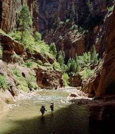 Hikers in the Narrows, Zion National Park, Utah