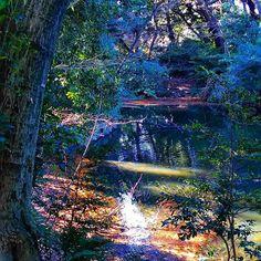【namiaki810】さんのInstagramをピンしています。 《静かな森の木漏れ日~穏やかな時間。  #木 #森 #池 #水辺 #木漏れ日 #光 #輝き #風景 #自然 #新宿御苑 #tree #forest #pond #waterside #sunlight #landscape #lovenature #shinjukugyoen》