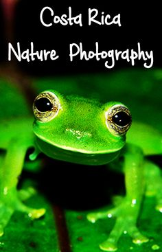 Stunning photos of Costa Rica's nature and wildlife by a local photographer