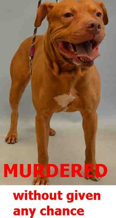 SILENT MURDERED 7-21-2016 --- Manhattan Center BLAKE – A1080826  **DOH HOLD 07/11/16**  MALE, TAN / WHITE, AM PIT BULL TER MIX, 3 yrs OWNER SUR – ONHOLDHERE, HOLD FOR DOH-B Reason ATT PEOPLE Intake condition EXAM REQ Intake Date 07/11/2016 http://nycdogs.urgentpodr.org/blake-a1080826/
