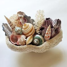 Love these beautiful coral bowls. Seashell Chandelier, Fireplace Surrounds, Sea Shells, Kendall, Bowls, Coral, Mirror, Elegant, Beautiful