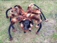 That is awful! Someone put a really realistic spider costume on their dog and planked people! I would have PEED!