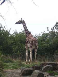 Pittsburgh Zoo and PPG Aquarium!
