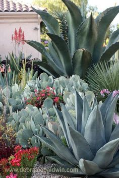 Another gorgeous landscape from Debra Lee Baldwin. Another gorgeous landscape from Debra Lee Baldwin Succulent Landscaping, Succulent Gardening, Cacti And Succulents, Planting Succulents, Garden Landscaping, Landscaping Ideas, Cacti Garden, Outdoor Cactus Garden, Luxury Landscaping