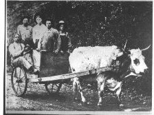 Cart from the Dorris Sawmill-Sumner Co TN-Tennessee State Library and Archives: Photograph and Image Search