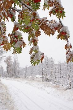 October came with snow by randihausken, via Flickr - Åmotsdal, Seljord, Norway.