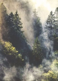 The 30 Most Beautiful Nature Photography - organic adventure in the wild through a forest of evergreen trees in the fall autumn through fog like a hippie boho bohemian mist through the trees Beautiful World, Beautiful Places, Beautiful Pictures, Beautiful Nature Photos, Beautiful Nature Photography, Aesthetic Photography Nature, Nature Aesthetic, Pretty Images, Amazing Nature