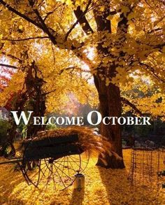 Welcome October....Now that you're here, you're going too fast!!!  Go slowly, slowly.... m